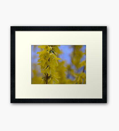 Yellow flowers near the Talvera River, Bolzano/Bozen, Italy Framed Print