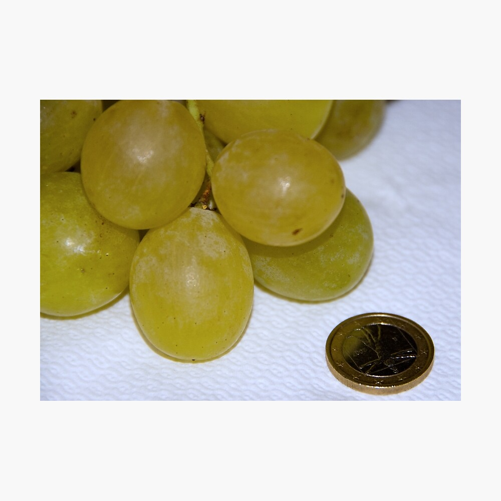 Monster Moscato grapes, Bolzano/Bozen, Italy Photographic Print