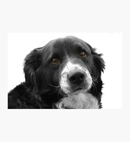 Border Collie and the Equal Time Message Photographic Print