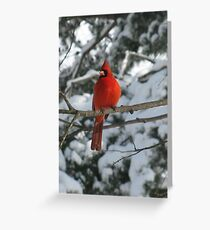Red Bird in Winter Greeting Card