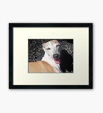 The Gigglin' Greyhound Framed Print