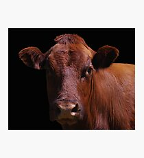 Cow Out Of The Dark Photographic Print