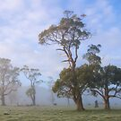 ~ Gums in the Mist ~ by Leeo