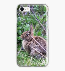 Eastern Cottontail in the Brush iPhone Case/Skin