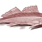 Fish Study by Kawka