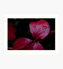 Red Leaf Raindrops, Bolzano/Bozen, Italy Art Print