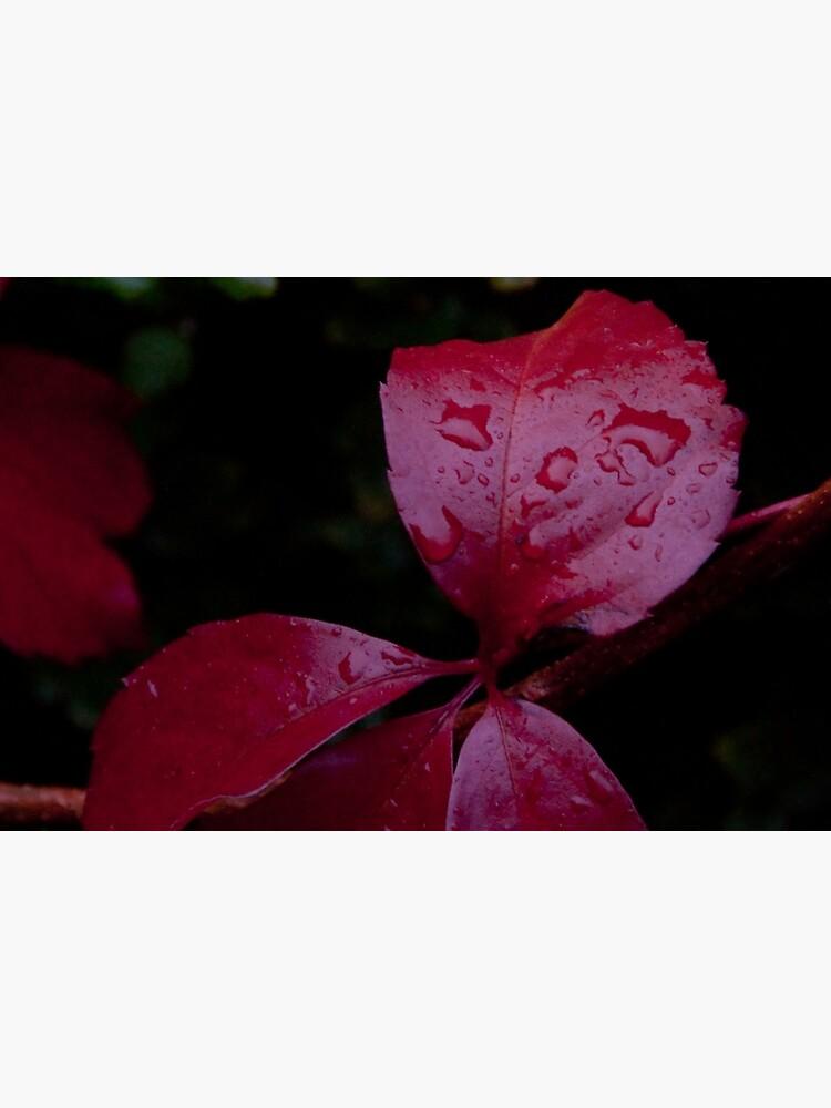 Red Leaf Raindrops, Bolzano/Bozen, Italy by leemcintyre