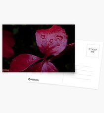 Red Leaf Raindrops, Bolzano/Bozen, Italy Postcards