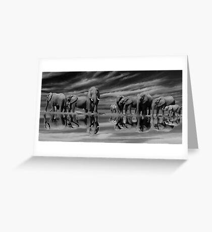The Addo Elephants Greeting Card