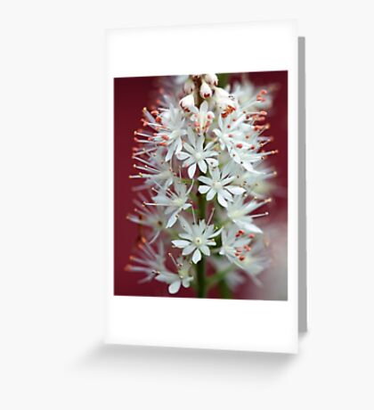 Tiarella - By The Red Barn Door Greeting Card