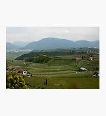 Valley with vineyards and apple orchards near Bolzano/Bozen, Italy Photographic Print