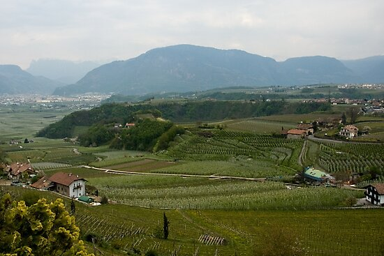 Valley with vineyards and apple orchards near Bolzano/Bozen, Italy by L Lee McIntyre