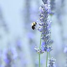 to be a bee in summertime is for the bee quite sublime... by Laurie Minor
