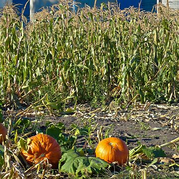 Autumn Harvest  by bobmeyers