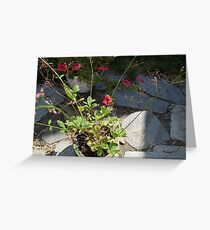 Jewels of Limon Greeting Card