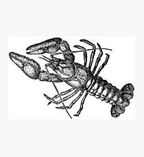 Crayfish Lookalike  Photographic Print