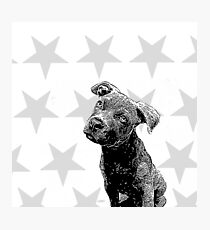 Pitbull Puppy Stars Photographic Print