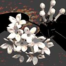 Artistic Stephanotis  by Heather Friedman