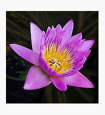 Floral Beauty Photographic Print