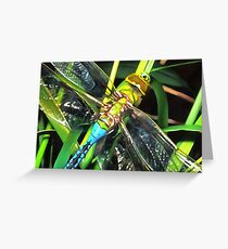 Blue Dragonfly Wings Greeting Card