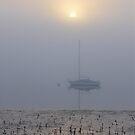 Morning mist, Hastings, Victoria by Frances Henke