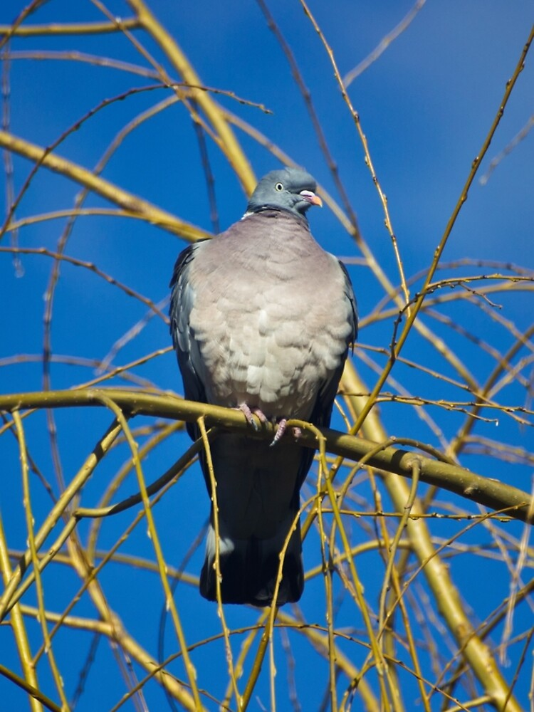 Pigeon Perch by InspiraImage