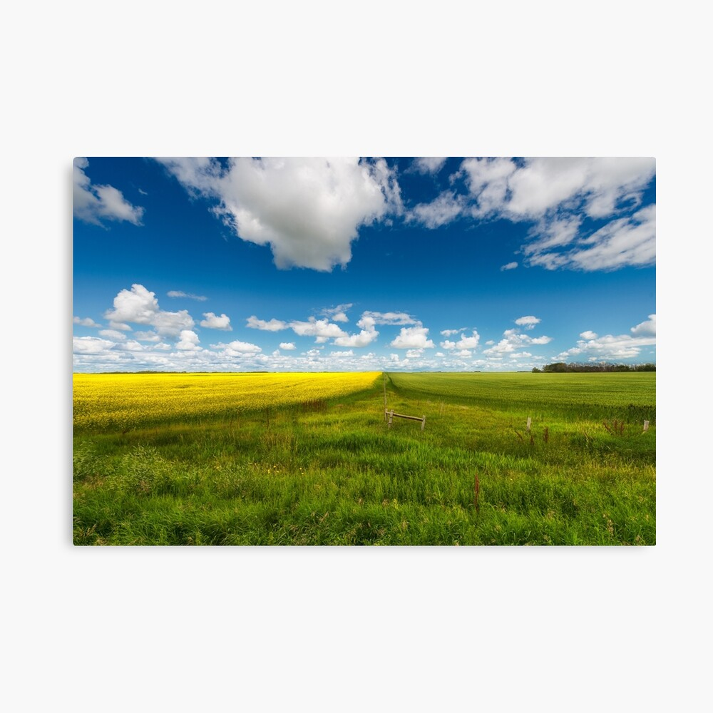 Two Fields Canvas Print