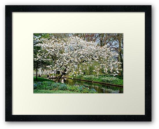 White blossoms by Arie Koene