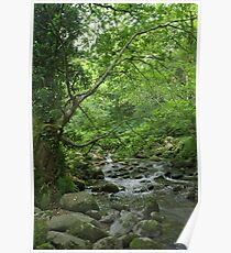 Mystic Mountain Stream Poster