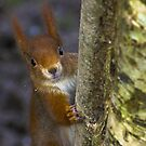 red squirrel by Brett Watson Stand By Me  Ethiopia
