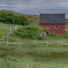 Red House Behind White Fence in Newfoundland, Canada by Gerda Grice