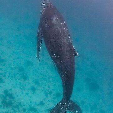 Humpback whale, Lady Elliot Island by KaraMurphy
