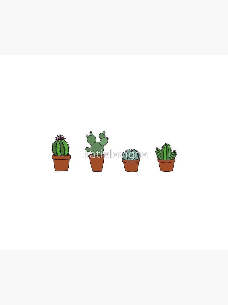 Cactus de katielavigna