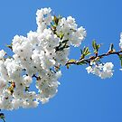 Blossoms in the sky by Arie Koene