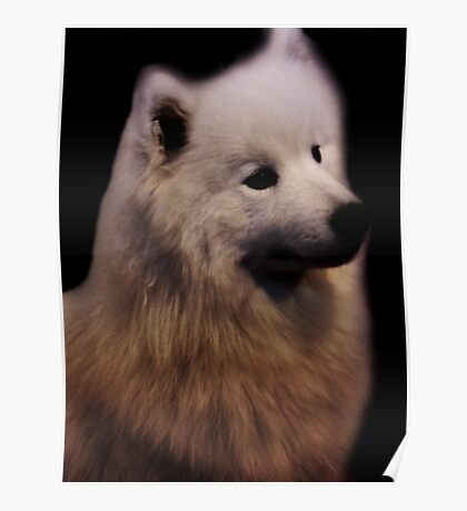 Samoyed Portrait Poster