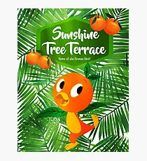 Sunshine Tree Terrace - Home of the Orange Bird Photographic Print