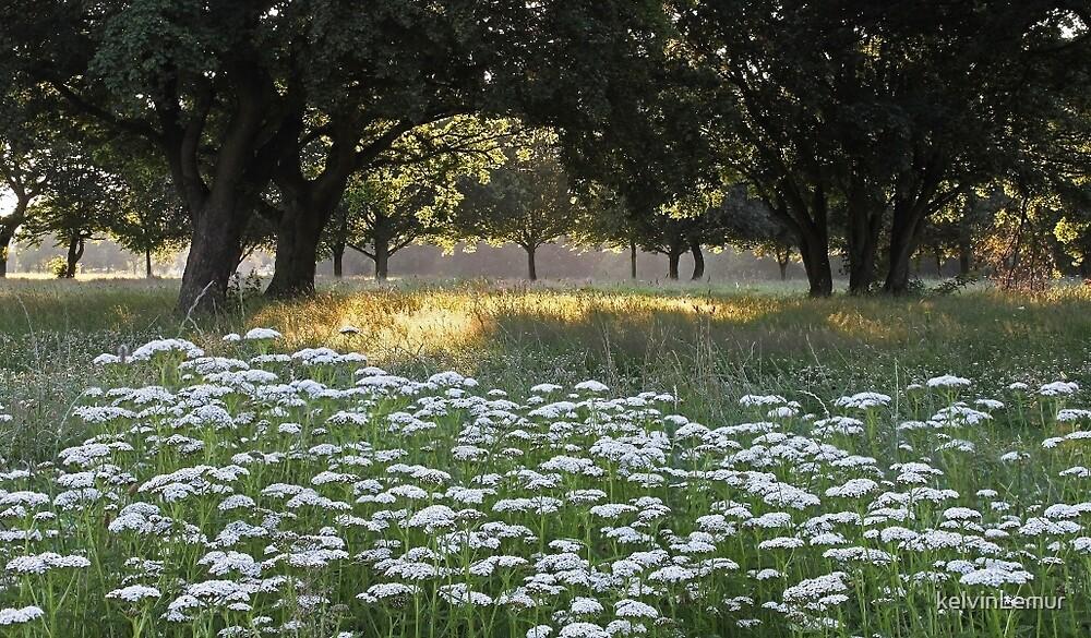 Summer meadow No. 4 by kelvinLemur
