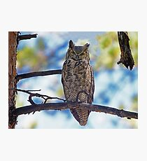 A Great Horned Owl Photographic Print