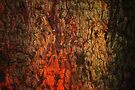 """""""Campfire""""  bark abstract by Laurie Minor"""