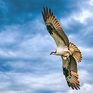 Osprey with Fish by Brian Tarr