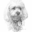 white dog drawing by Mike Theuer