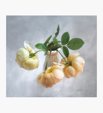 "Lovely Yellow  ""Jude the Obscure"" English Roses Photographic Print"