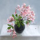 Wild Azalea Still Life by LouiseK