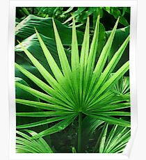 Tropical Leaves, Windmill Palm Poster