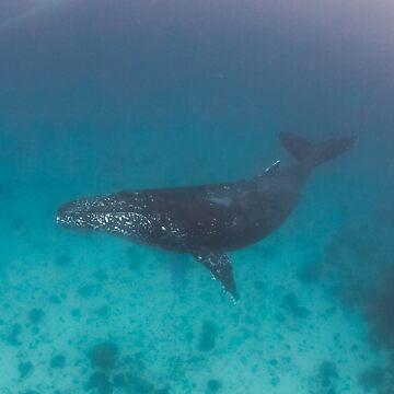 Whale swimming - print by KaraMurphy