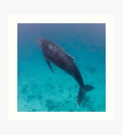 Whale wonders - print Art Print