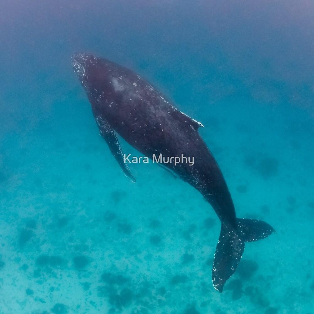 Whale wonders - print by Kara Murphy
