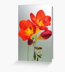 Fragrant Freesia.. Greeting Card