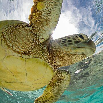 Hopeful turtle - print by KaraMurphy