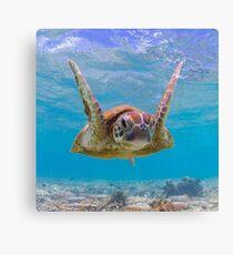 Joyful turtle - print Canvas Print